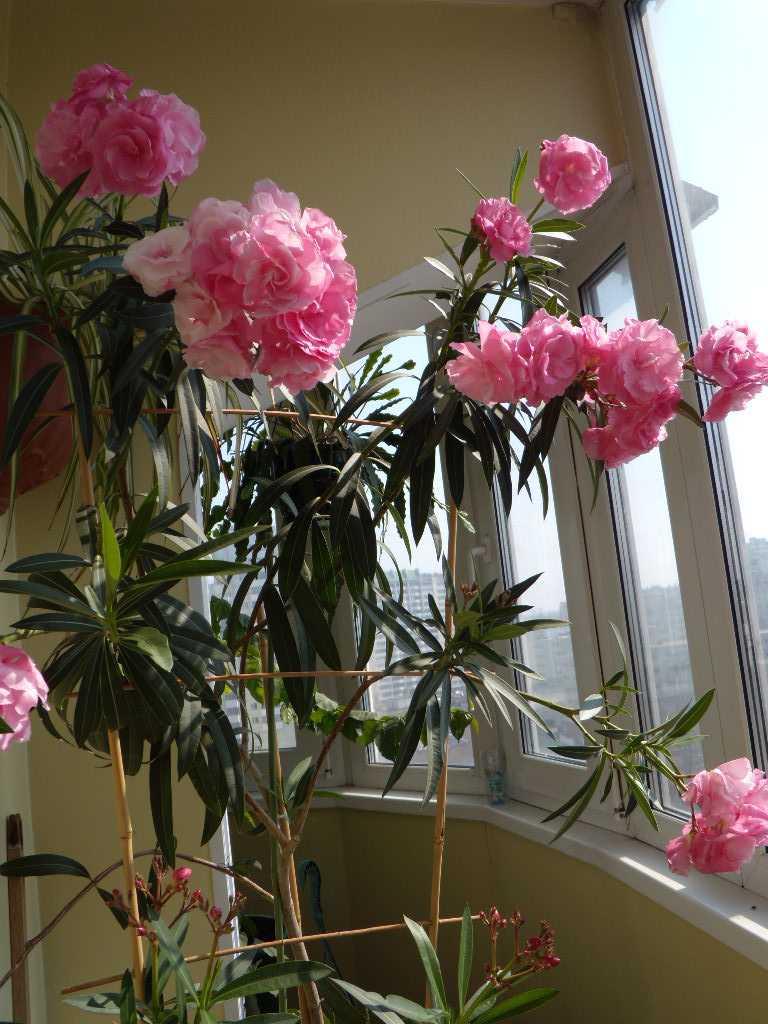 Untuk entah bagaimana mencerahkan bunga yang tidak terlalu aktif, Anda harus memilih tanaman dengan warna-warni.