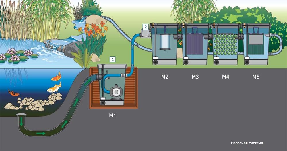 Как очистить пруд от водорослей