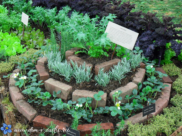 Кресс-салат: описание и польза растения
