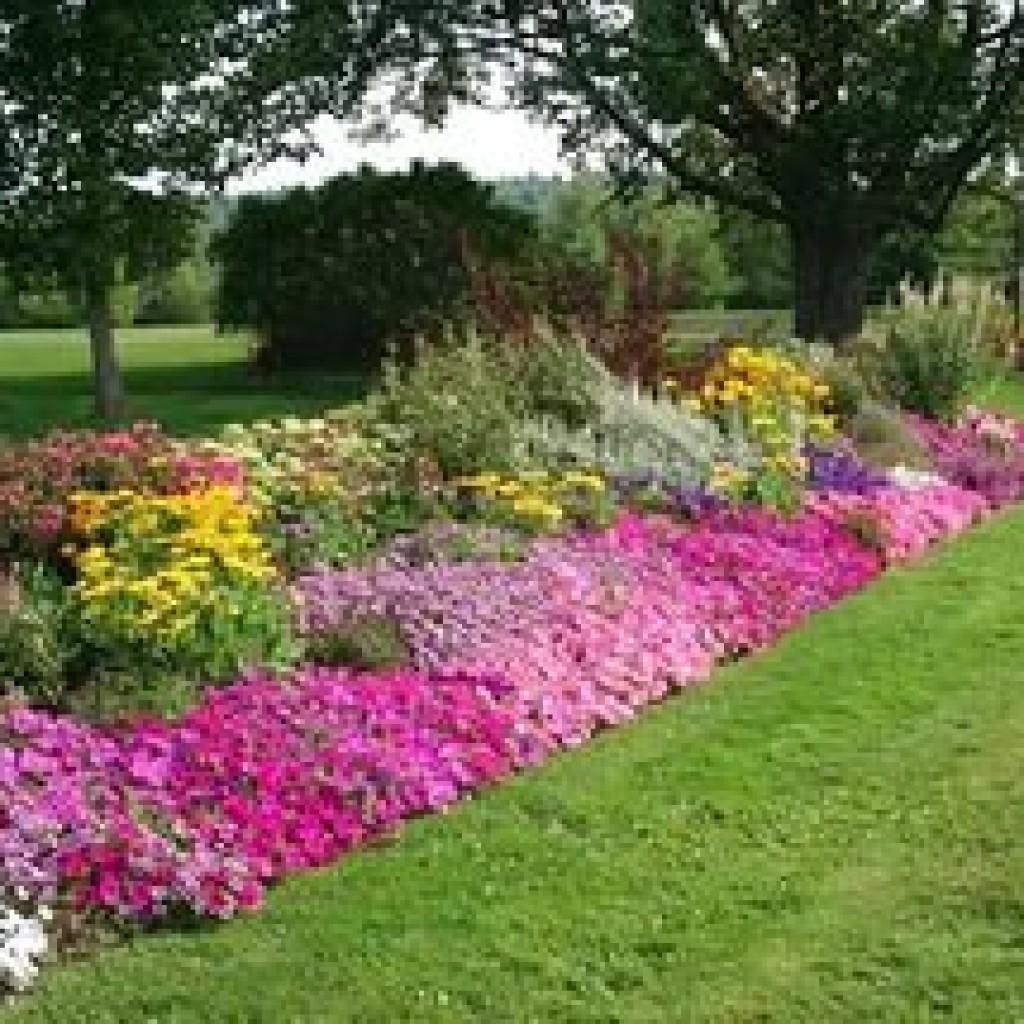 Названия однолетних цветов для клумбы фото