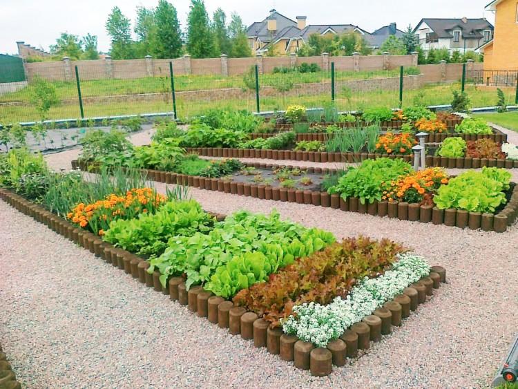 Как распределить сад на участке
