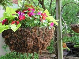 Мох сфагнум для комнатных растений и рассады