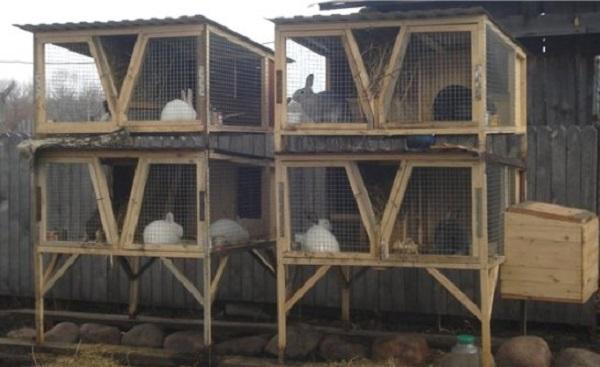 Стандартные размеры клеток для кроликов. Общие требования к конструкции. Удобная кормушка от Золотухина