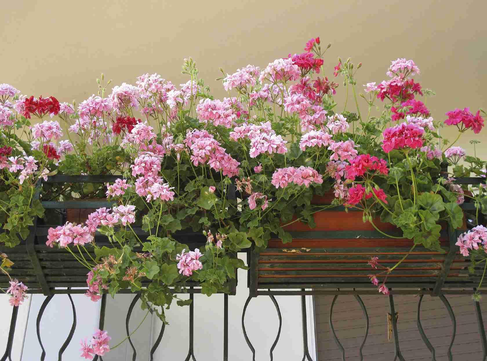 Цветы любящие тень на улице