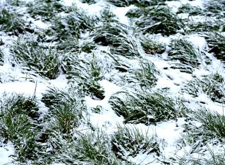 Газон перед зимой. Как ухаживать за газоном осенью
